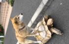 Seguramente no habran visto jamas un perro haciendo un paseo por una tortuga?