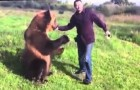 I've never seen a bear behave like this. Soo sweet !