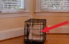 Gracias a una telecamara, aqui resuelto el misterio del cachorro que huye de la jaula
