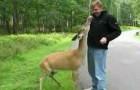 video med Rådjur