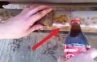 Schütte etwas Coco-Cola darauf und lass' es einwirken: In wenigen Sekungen passiert pure Magie!