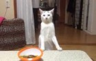 Look at this cat's reaction !! I've never seen anything like it !