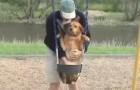 Questa è una delle cose più assurde che ho visto fare ad un cane