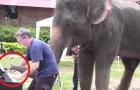 Este homem toca piano para os elefantes. A reação deles é surpreendente!