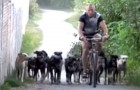 This man lives with 16 very lively dogs, but their good behavior will surprise you !!