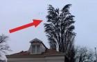 Het lijkt een normale boom met vogels, maar iets later... verbazend!
