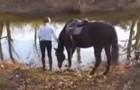 Questo cavallo ha paura dell'acqua, ma appena riesce a superarla... dà SPETTACOLO!