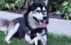Deciden de ayudar un perro sin esperanzas: el resultado final es maravilloso