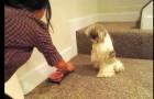 Il donne à manger à son chien mais il l'empêche de manger tout de suite: la raison est trop drôle