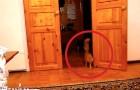 Son chat s'approche prudent : dès qu'il touche un bouton, vous comprendrez pourquoi!
