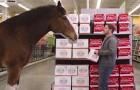 Während dieser Junge Bier kauft, bekommt er unerwartet Besuch