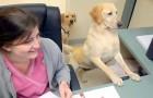 Porta i suoi cani a lavoro: il modo in cui la aiutano è uno spettacolo