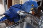 Ein Papagei hüpft auf das Waschbecken: Was dann folgt, schenkt euch ein Lächeln