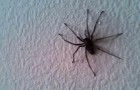 Video Video's van Spinnen Spinnen