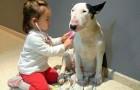 Il modo in cui questo cane si lascia visitare ha dell'incredibile. Questo è amore!