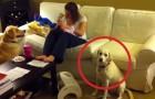Un bambino sta facendo i capricci, ma guardate come interviene il cane... BRAVO!