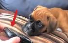 Mette sua moglie in viva voce: la reazione del cane è più adorabile che mai