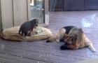 Questo cucciolo non vuole mettersi a dormire: guardate come reagisce sua madre...
