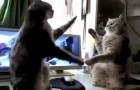 He starts filming his cats: what happens next will make you die laughing !!