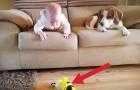 Le bébé fait tomber son jouet: la réaction du chien n'a pas de prix!