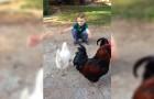 Un bambino chiede un abbraccio: la reazione della gallina vi lascerà a bocca aperta