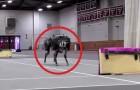 Le abilità di questo robot sono già terrificanti, ma guardate cosa fa con gli ostacoli...