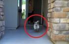 Ze opent de voordeur: wat deze hond doet, zal zeker een glimlach op je gezicht brengen