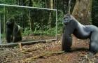 Plaats een spiegel in het woud... De reactie van deze wilde dieren zal je verrassen