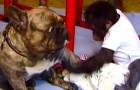 Un bebé orangutan fue abandonado de la familia: esto es lo que sucede cuando encuentra el perro...