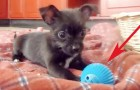 Regalan al cachorro una nueva pelota, pero tiene una caracteristica que no se esperaba!