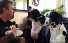 Ele não quer dividir o sanduíche, veja a reação do cão!