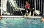 Ils se préparent pour la compétition : regardez ce que fait le chien ... hilarant!