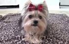 Allena il suo cane a eseguire dei trucchetti: ciò che riesce a fare oggi è stupefacente