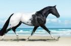 Das eleganteste und majestätischste Pferd der Welt...