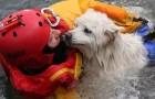 Un cane ringrazia il pompiere che lo ha salvato: ecco chi sono i veri eroi