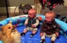 Cuando el pomerania comienza a saltar, la reaccion de los gemelos asombra incluso a la mama!