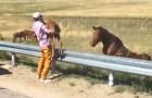 Ils trouvent un poulain apeuré en pleine route... Ce qu'ils font est émouvant!