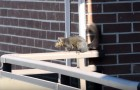 Video of Squirrels