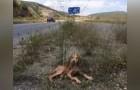 Enfermo y abandonado en medio de la nada: aqui el salvataje de un cachorro afortunado