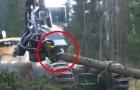 A facilidade com a qual este maquinário destroi os troncos de árvore é assustador