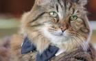 Ecco a voi il gatto più vecchio del mondo: ben 121 anni di saggezza felina!