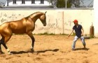 Seid dabei, wie eines der schönsten Pferde der Welt dressiert wird