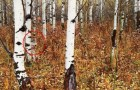 Video Naturvideos Natur