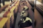 Di notte questa caffetteria apre le sue porte ai cani randagi: il motivo è toccante