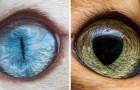 Un ragazzo si specializza nel fotografare gli occhi dei gatti: il risultato è ipnotico