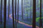 Chaque année au printemps, cette forêt belge offre un spectacle qui coupe le souffle