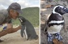 Video Video's van Pinguins Pinguins