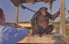Sie hat diesen Affen vor 18 Jahren gerettet. Das passiert, als sie ihn wieder trifft