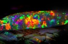 De meest kostbare steen is gelijk ook de uitbundigste: laat je grijpen door zijn psychedelische kleuren