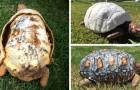 Video Video's van Schildpadden Schildpadden